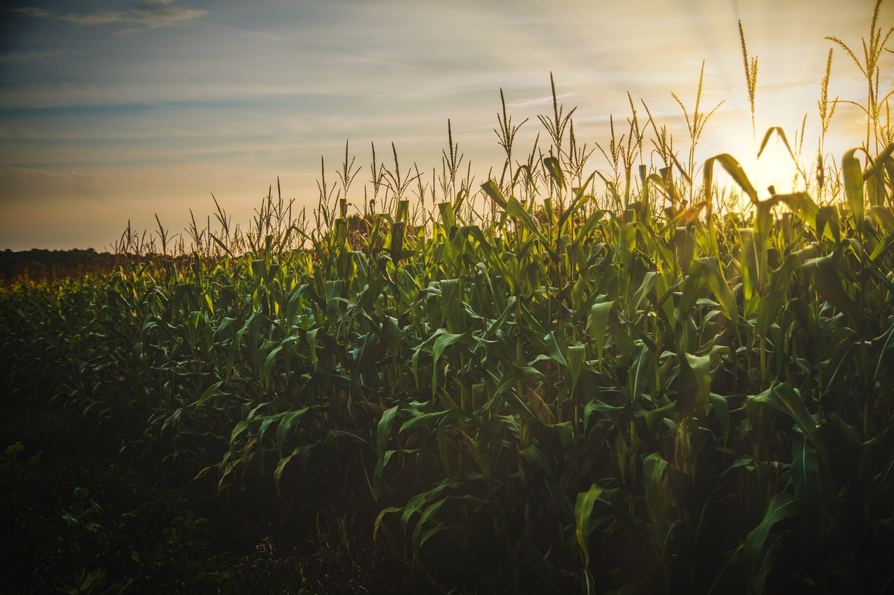 Iowa Grows More Than Corn, We Grow Analytics Talent!